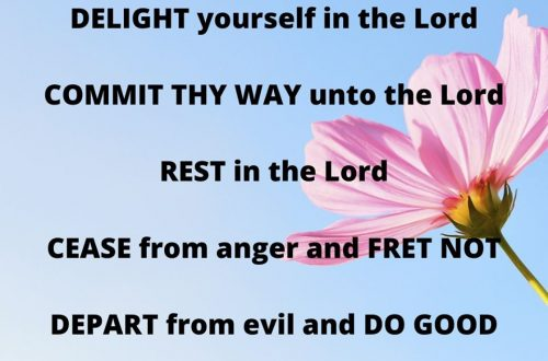 According to Psalm 37 here are 8 things we should do., not just during this pandemic but anytime in our walk with the Lord.