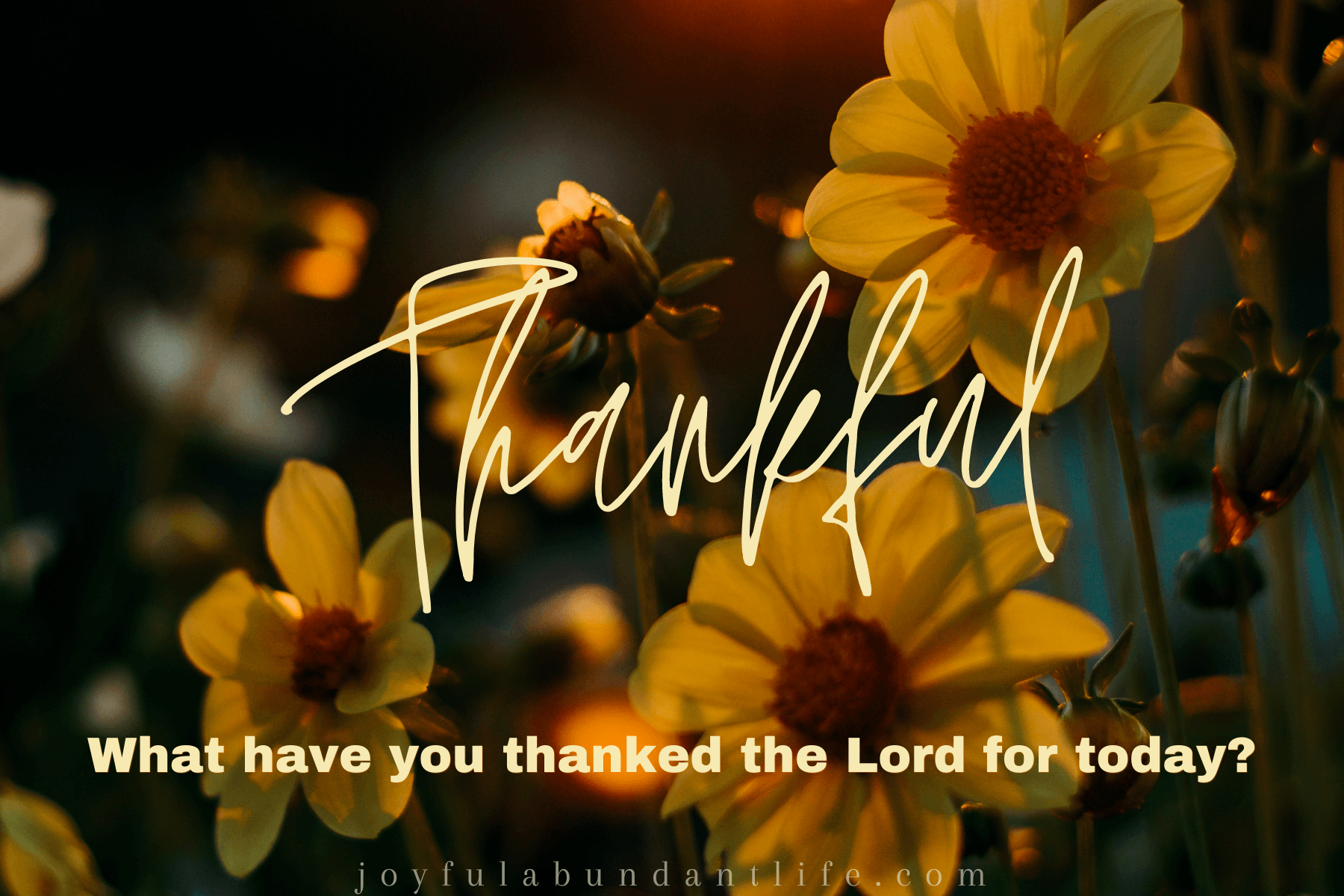 What Have You Thanked The Lord For Today?