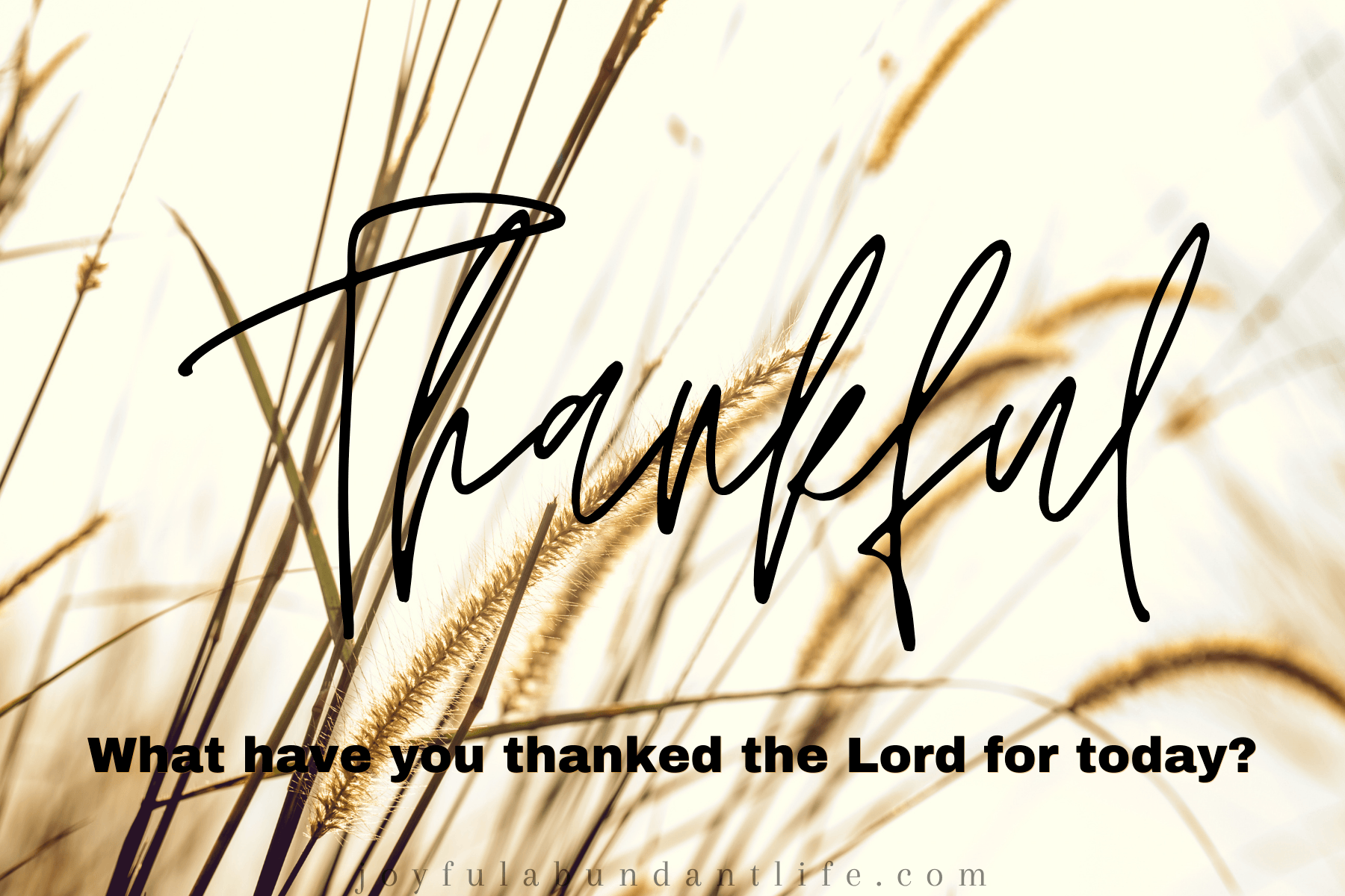 Thankful - God can furnish a table in the wilderness